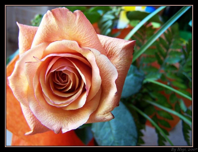 ... Rose ...