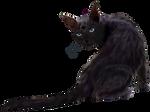 black cat 1