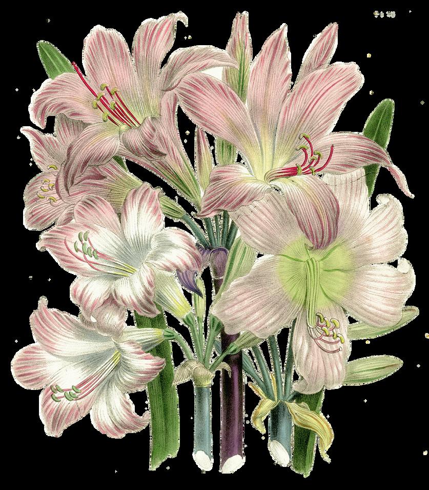 Vintage flowers by elly05