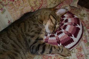 Cuddle the Pillow Kitty