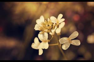 White Flower by Fynnex