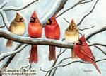 Winter Cardinals - 2015 Holiday Card