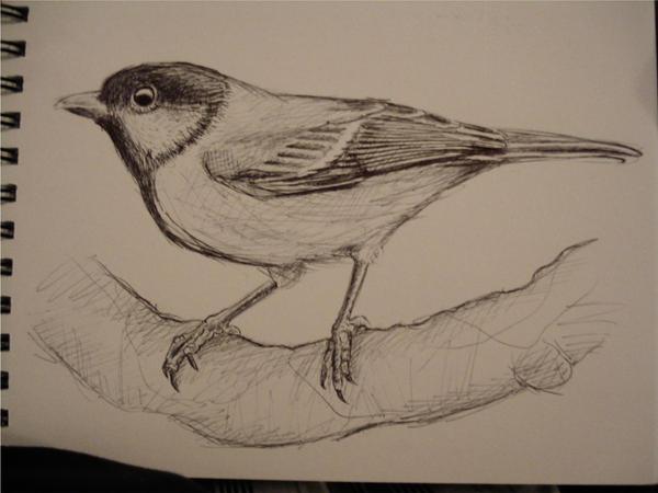 Quick Bird Sketch By Pitschke On DeviantART