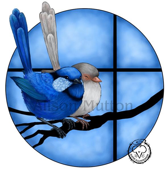 Splendid Fairy Wrens