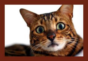 Scaredy Cat by aceoft