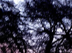 darkwhisps