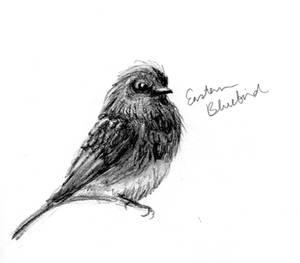 PERSONAL   Eastern Bluebird