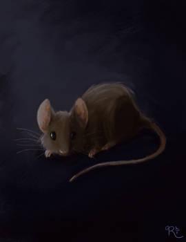ORIGINAL   House Mouse (Mus Musculus)