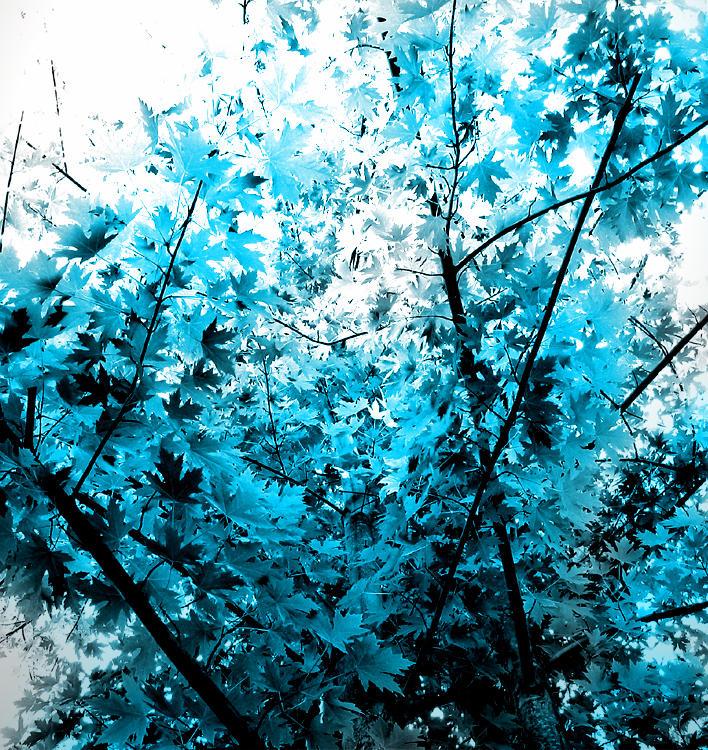 on leaf blue - photo #21