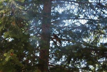 Blue Jay at Woods Canyon Lake