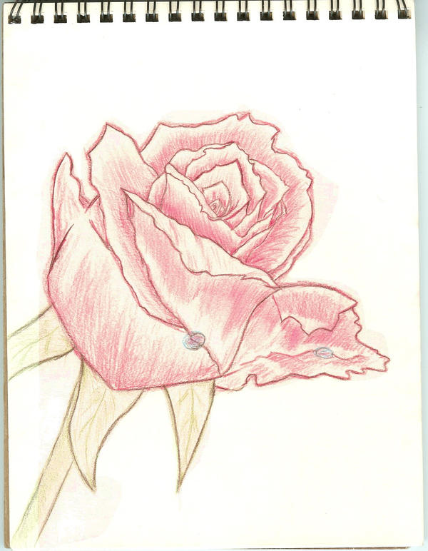 tea rose coloring pages - photo#29