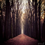 The Road of Silence