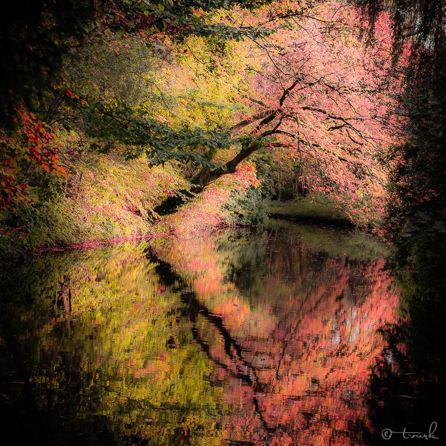 Autumn Bliss by tvurk