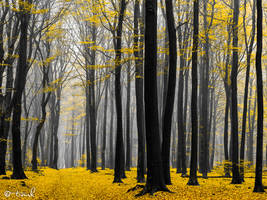 Golden Grove by tvurk
