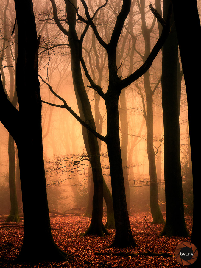 Eden by tvurk