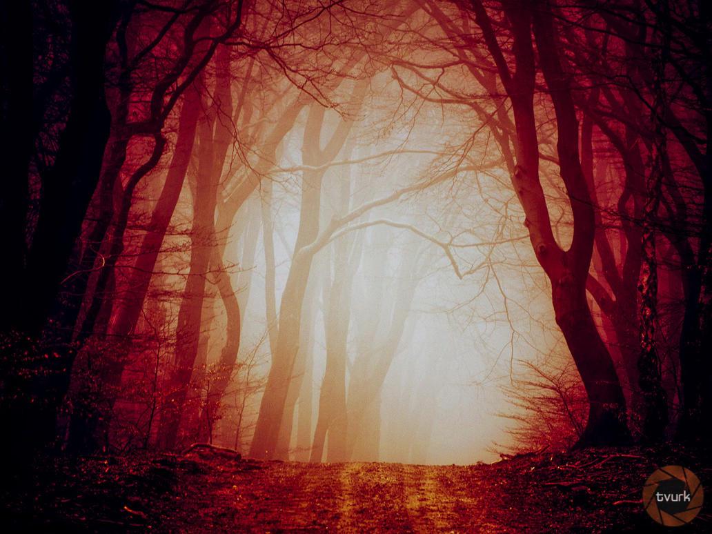 Redrum Forest by tvurk