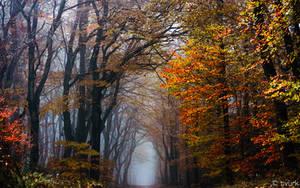 Neldoreth in Twilight by tvurk