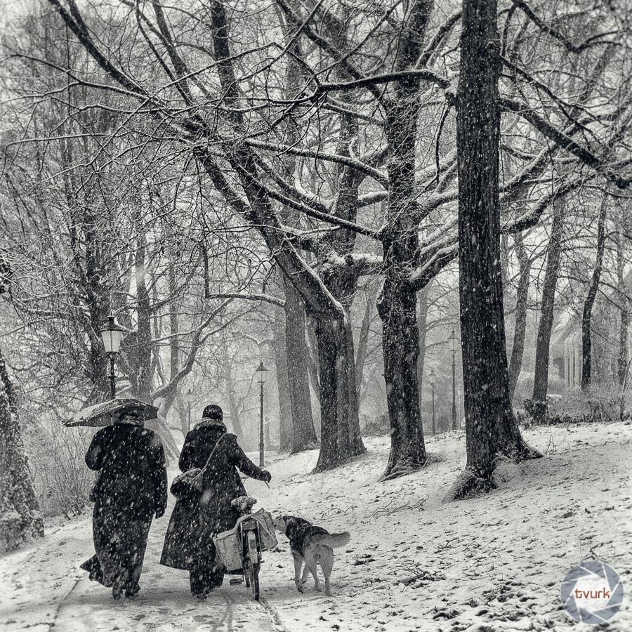 December Snow by tvurk