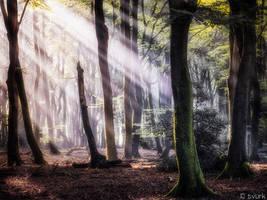 Supernatural Sunlight by tvurk