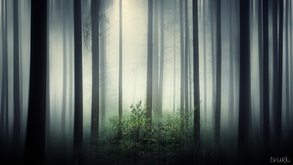 Misty Mirage by tvurk
