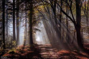 Rays of Splendor by tvurk