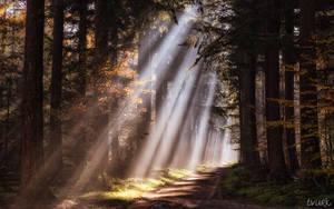 Luminous Bliss by tvurk