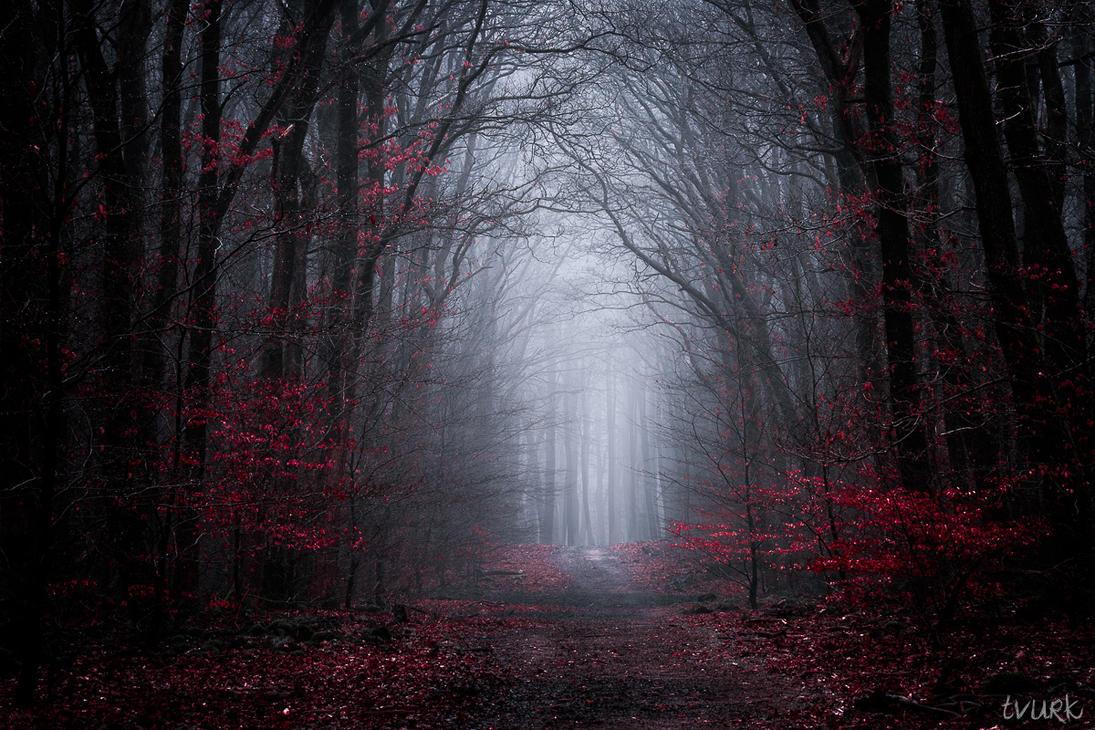 Dark Symphony by tvurk