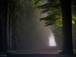 Dimly Lit Dawn by tvurk