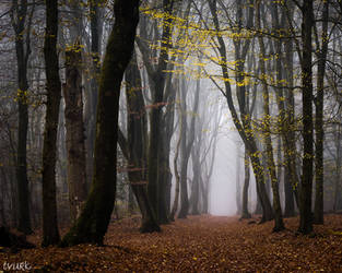 Walk Beneath the Yellow Leaves by tvurk