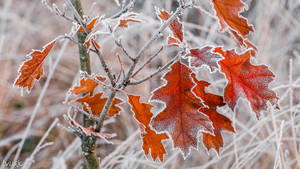 Fall Meets Frost by tvurk