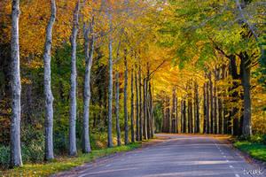 Autumn's Gold by tvurk