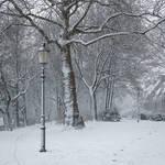 Milky White Winter