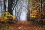 The Fringe of Fall