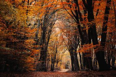 Amber Grove by tvurk