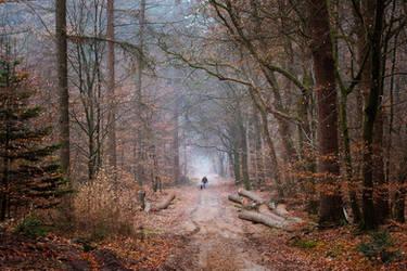 Sunday Stroll by tvurk