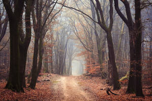 The Wicca Woods by tvurk
