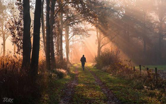 Run Towards the Light