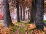 Cozy Pathway