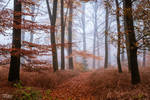 The Amber Woods
