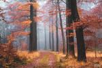 Woodland Daydream