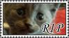 .: R.I.P Lulu :. by RooksRookery