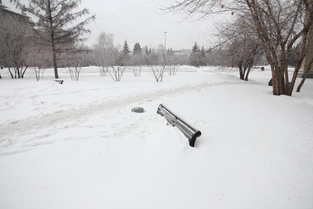 IMAGE: http://fc00.deviantart.net/fs70/i/2015/039/7/7/under_snow_by_rbnsncrs-d8h5qh3.jpg