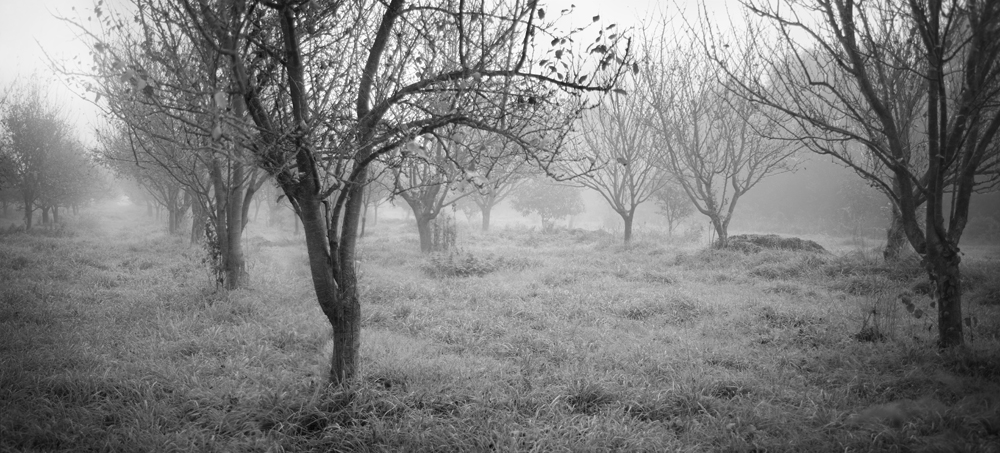 The Apple Trees by BoiledFrog