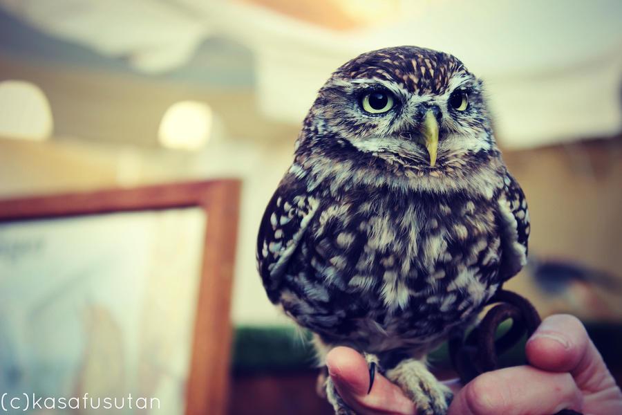 Little ball of feathers by Kasafusutan