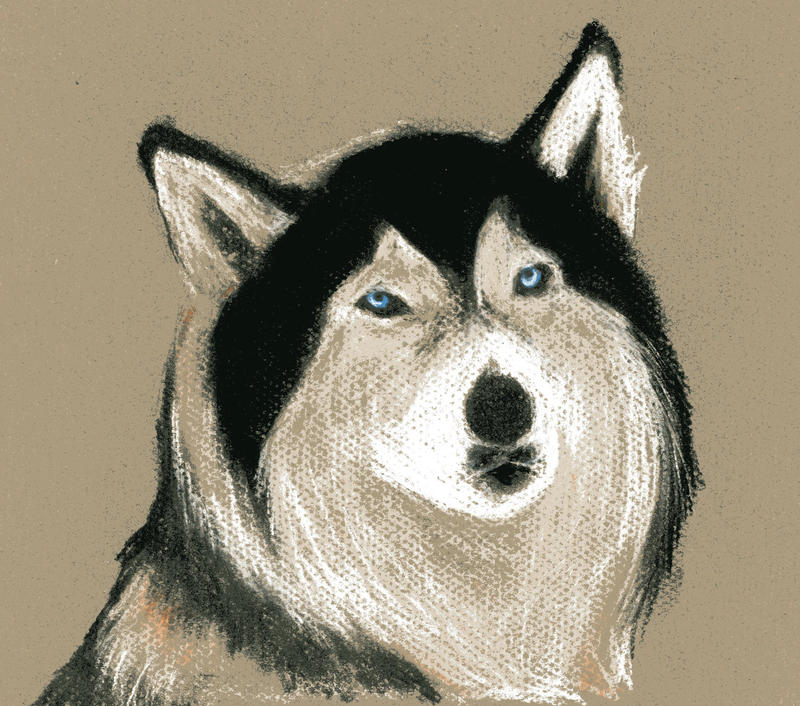 Huskies by biomonkz