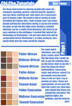 Skin Tone Tutorial-Page 1