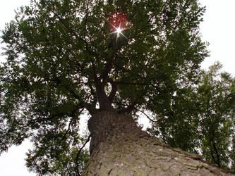 tree by celestialdebris