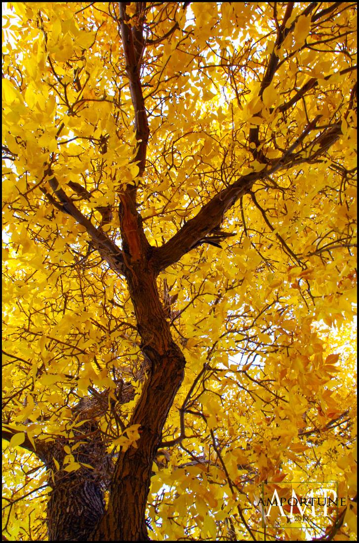 Yellow Autumn Tree by sintar