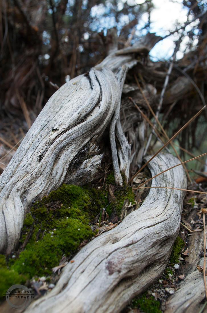 Hidden Moss by sintar
