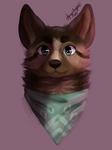 A Soft Boi